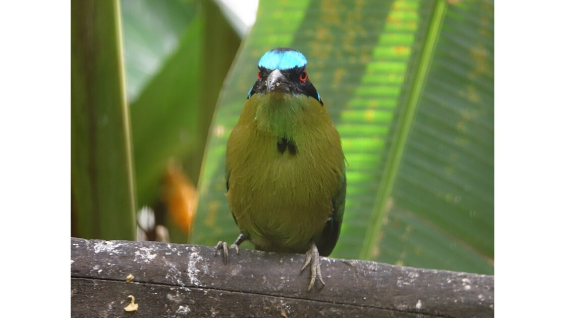 Colombie Jardin Botanico del Quindio Ermitano Verde 2