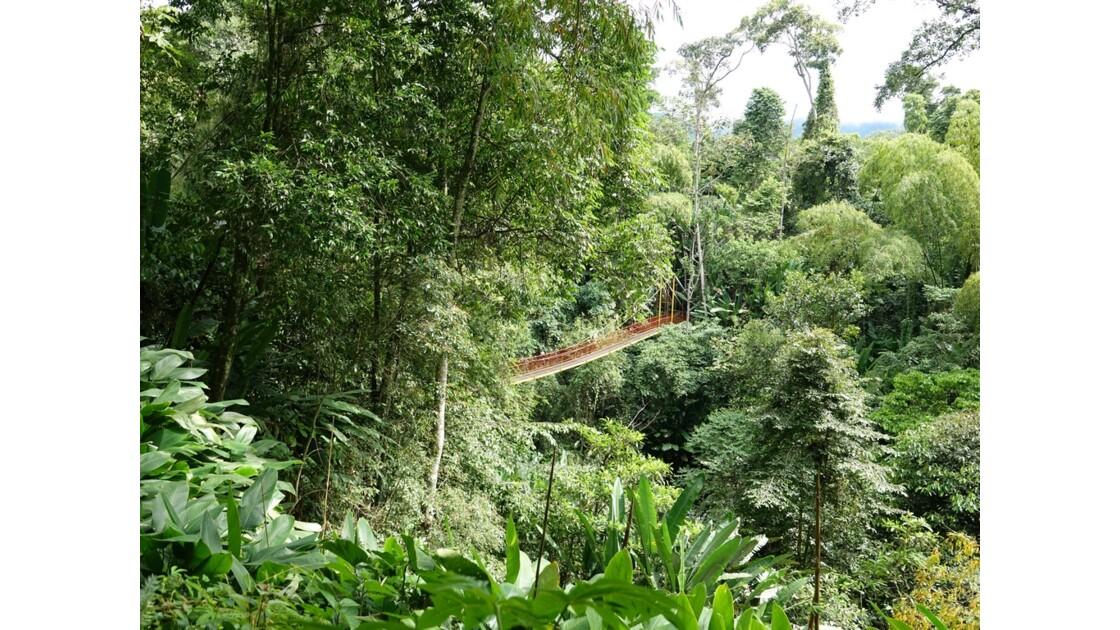Colombie Jardin Botanico del Quindio 4