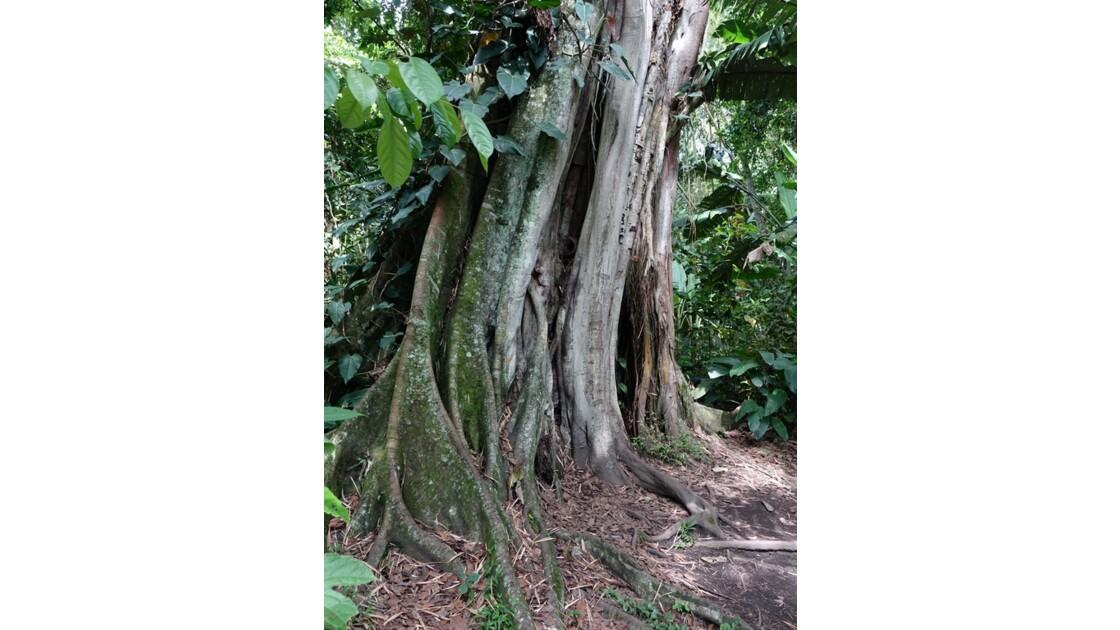 Colombie Jardin Botanico del Quindio 5