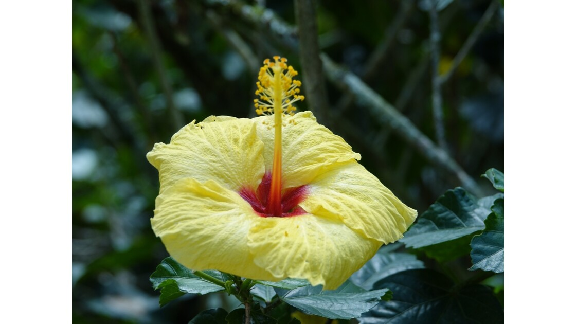 Colombie Jardin Botanico del Quindio 9