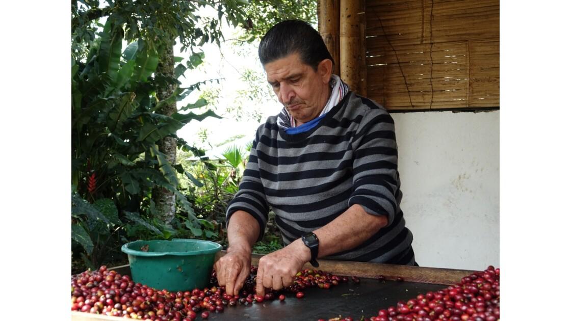 Colombie vallée de Corcora Tri du café 4