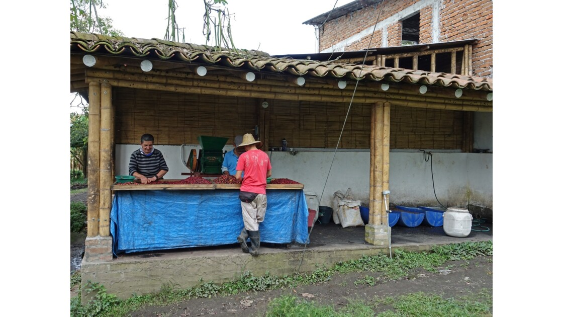 Colombie vallée de Corcora Tri du café 7