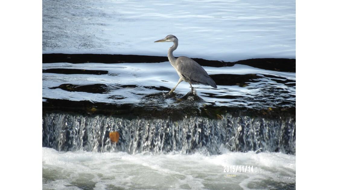 La marche dans l'eau