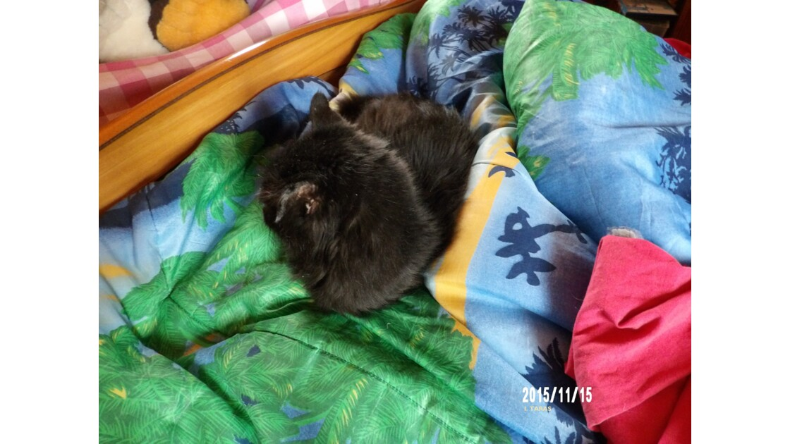 La place privilégiée pour des chats