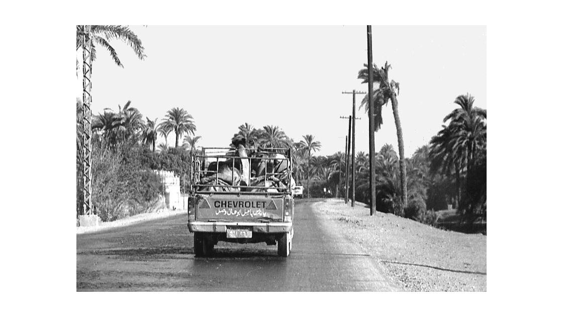 Transport de dromadaires