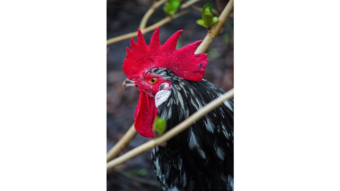 Conservatoire avicole de Magesq dans les Landes