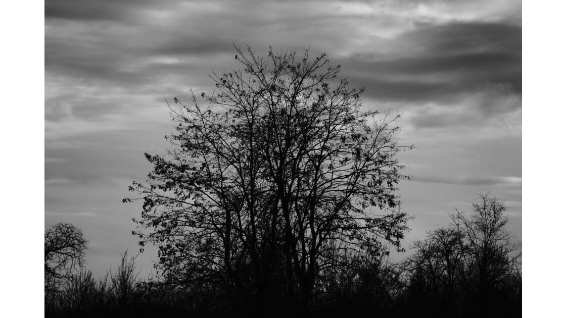 faune et flore au bois de vincennes