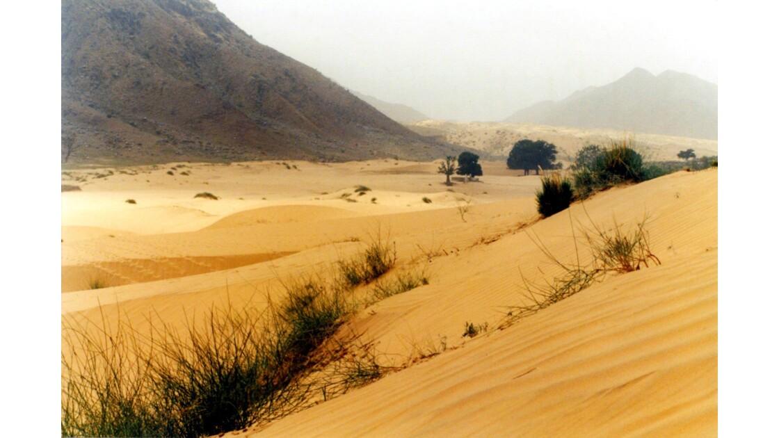 Les dunes de Pushkar