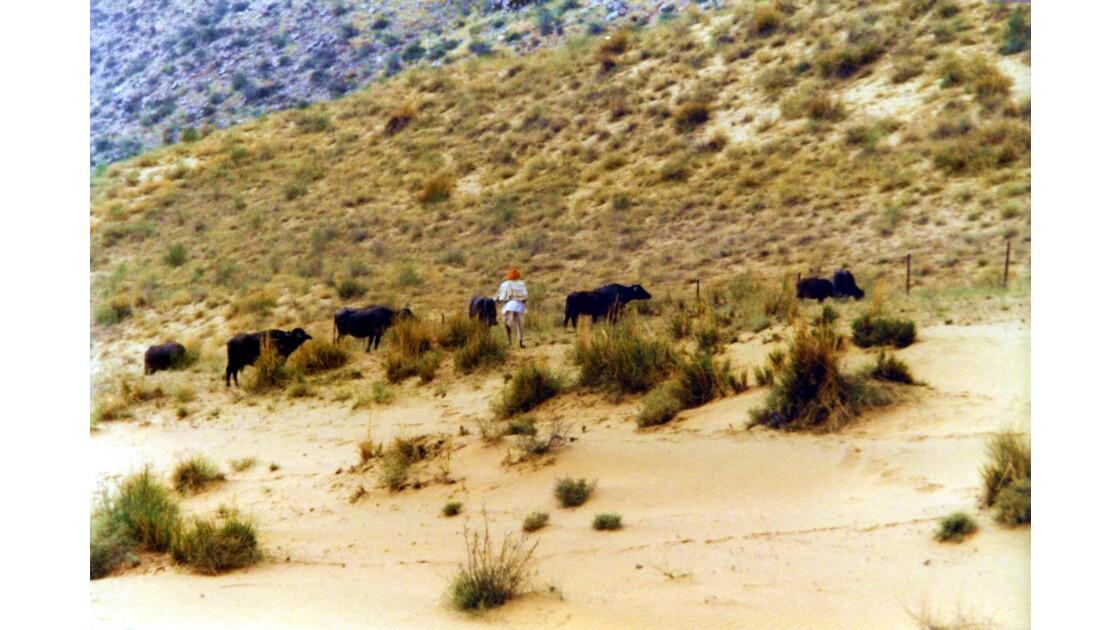 Le berger de Pushkar