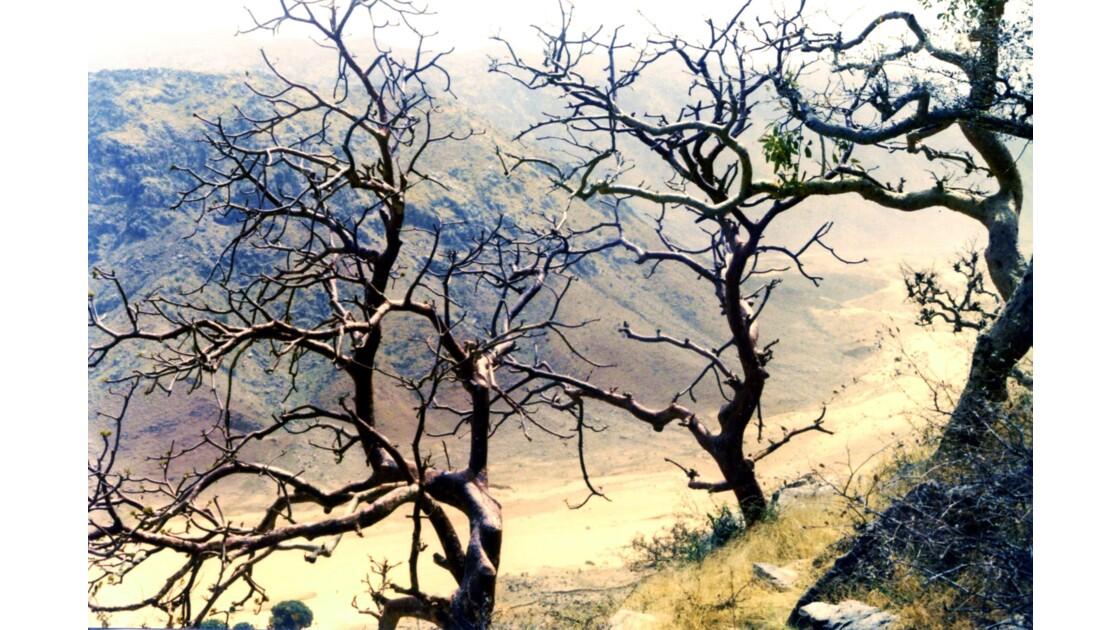 Les arbres du désert