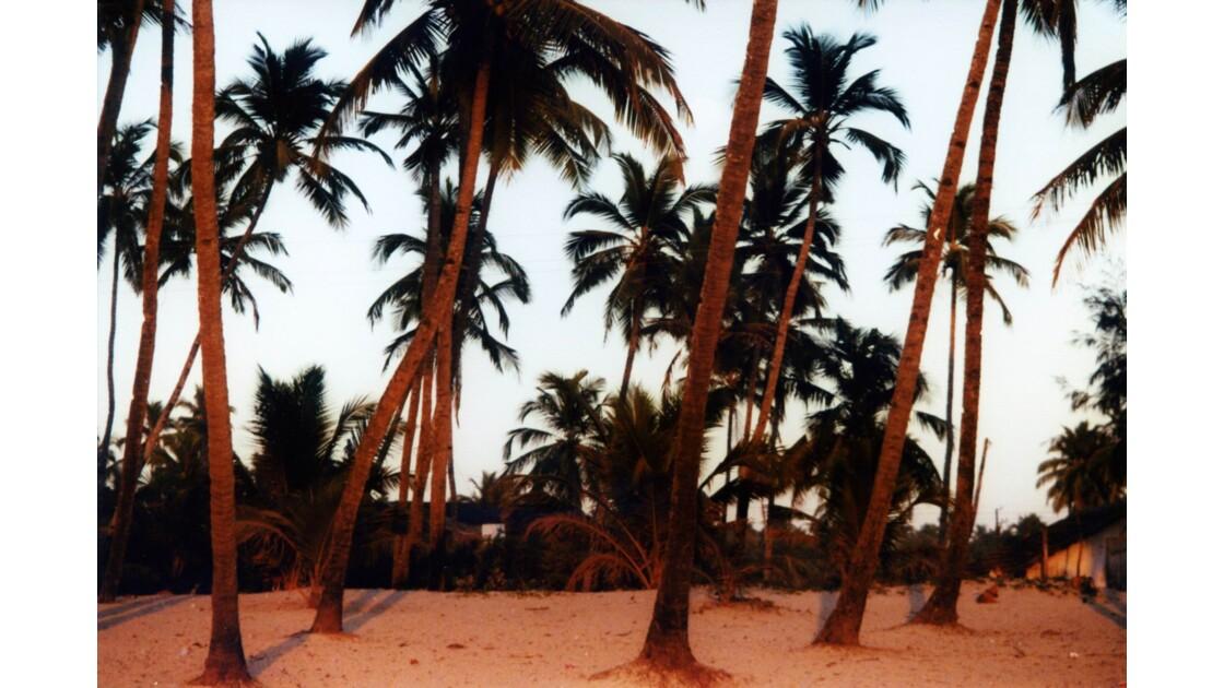 Palmeraie derrière la plage