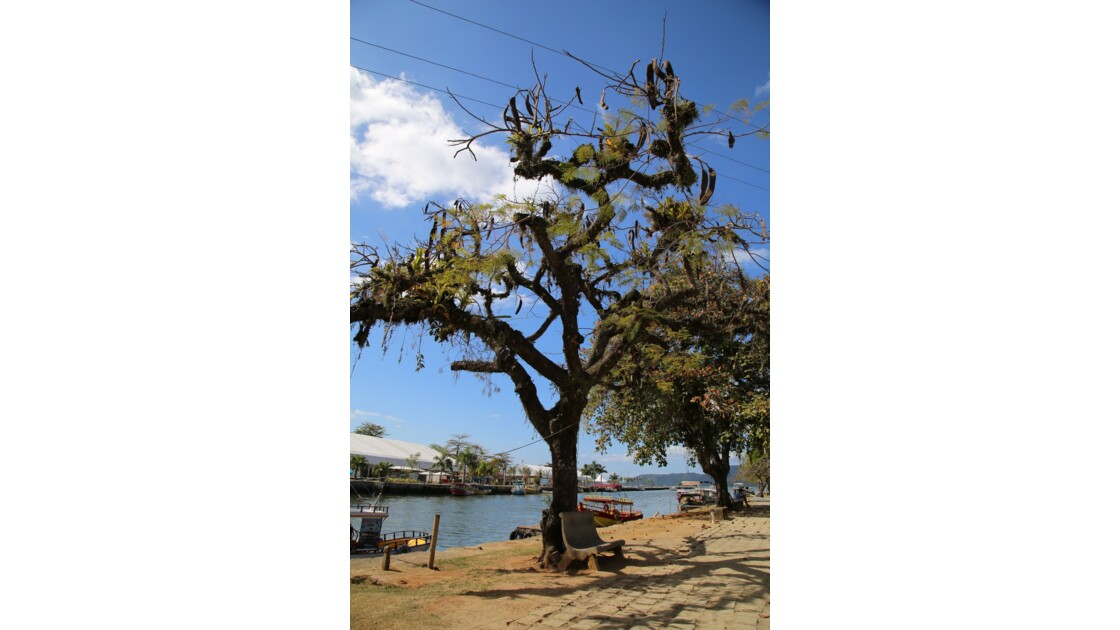 PARATY (feuillages)