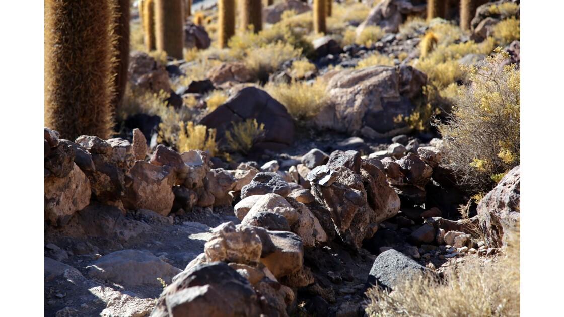 UYUNI L'île aux cactus (suite)