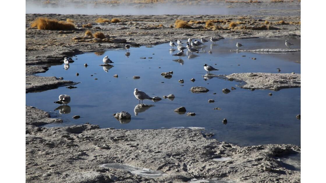 Aguas Calientes: dernières photos, baignade et oiseaux