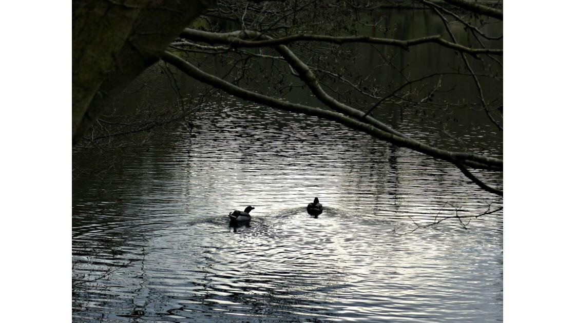 Rueil et l'étang de Cucufa