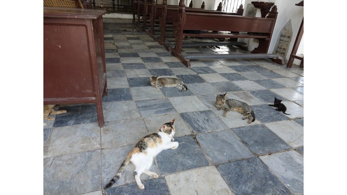 Colombie les chats du Cimetière de Mompox 1