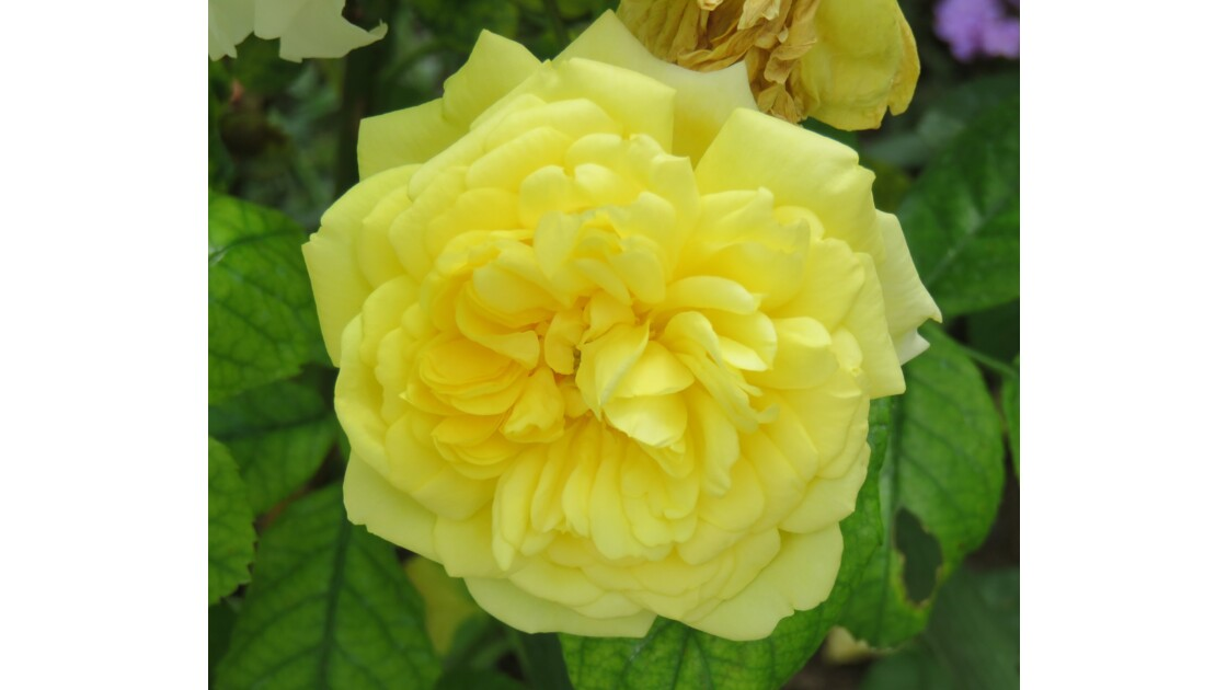 Une fleur parmi des fleurs