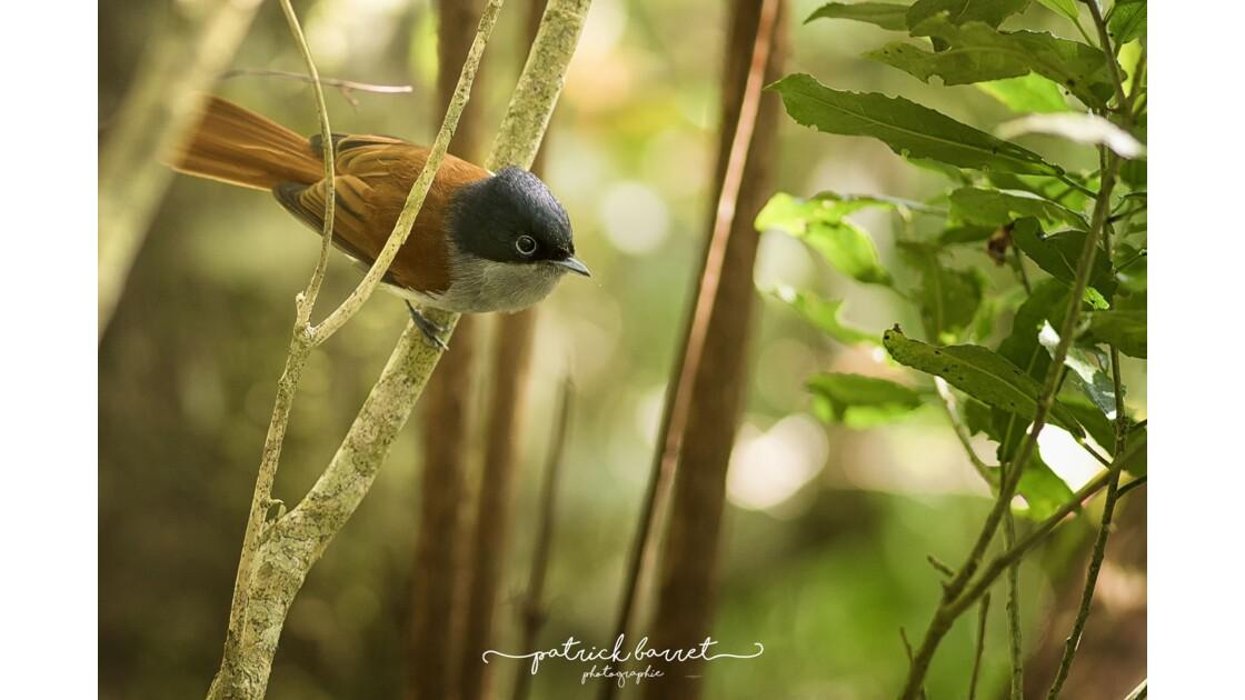 Z'oiseau la Vierge – Cilaos – Île de la Réunion © P A T R I C K • B A R R E T