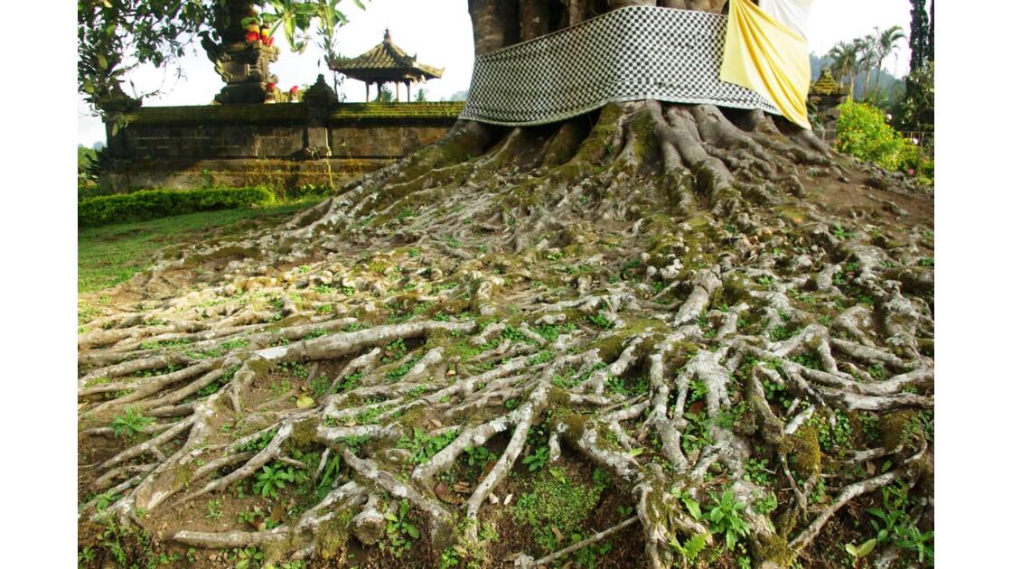 La Nature de Bali