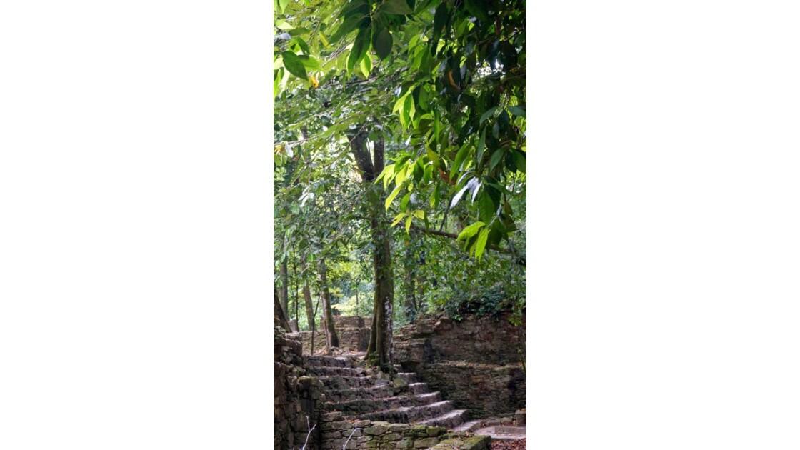 Festival de pierres et d'arbres