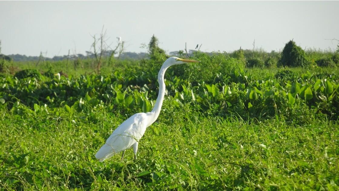 Colombie Mompox Sur la lagune de Pijilos 3