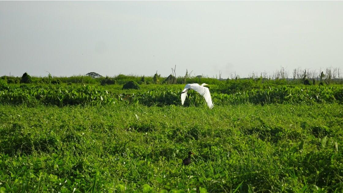 Colombie Mompox Sur la lagune de Pijilos 6
