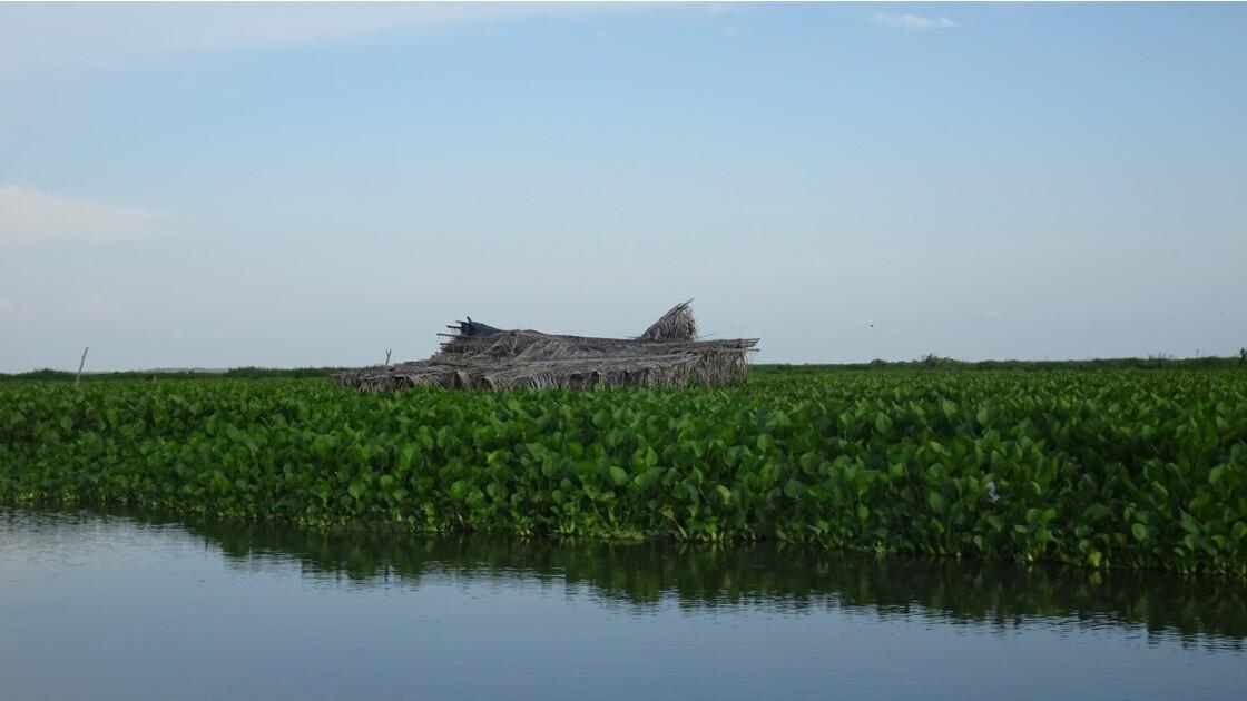 Colombie Mompox Sur la lagune de Pijilos 9