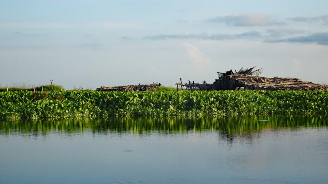 Colombie Mompox Sur la lagune de Pijilos 10