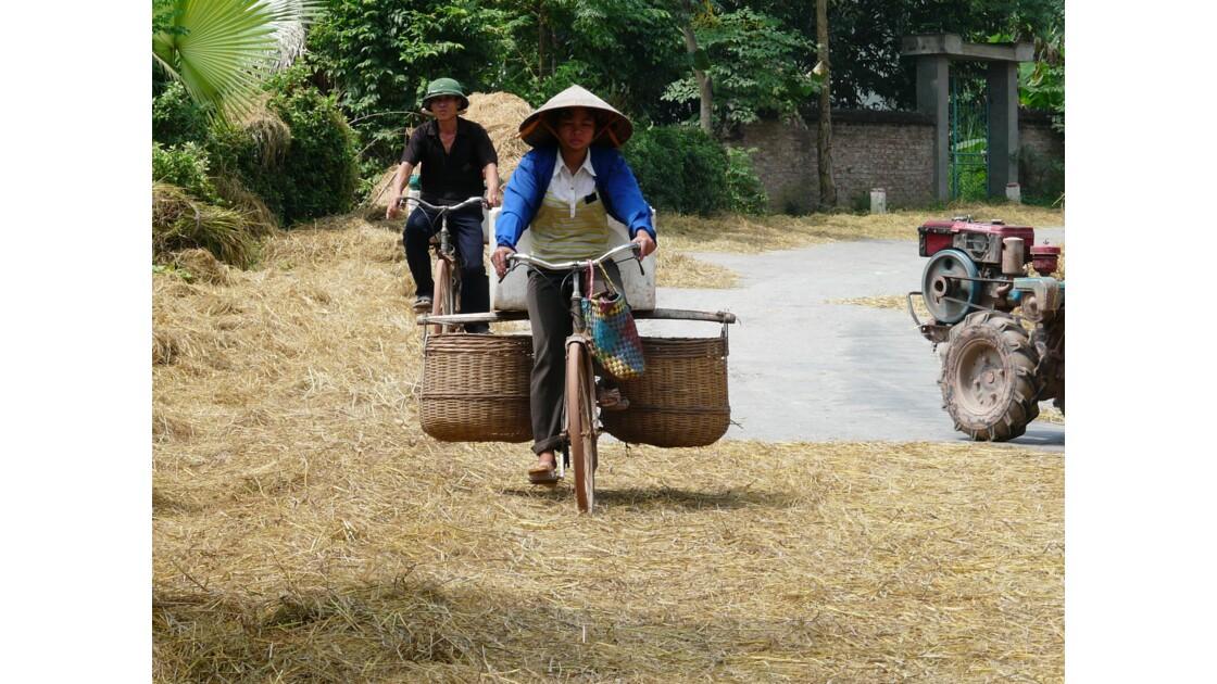 Paille de riz