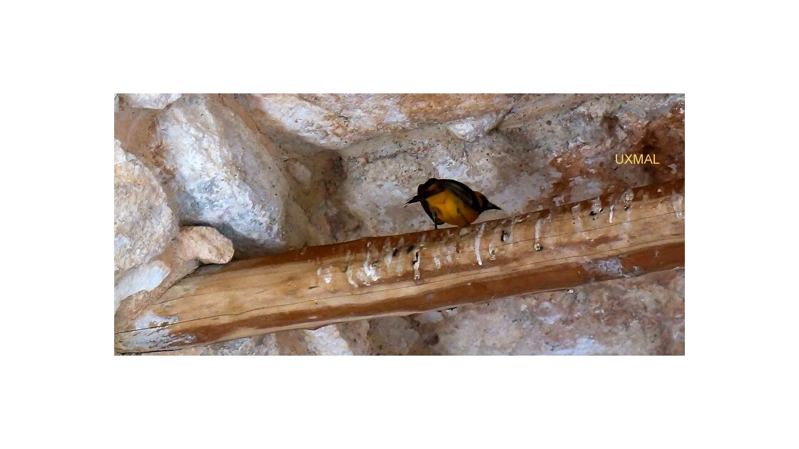 Des pierres, un iguane et un oiseau