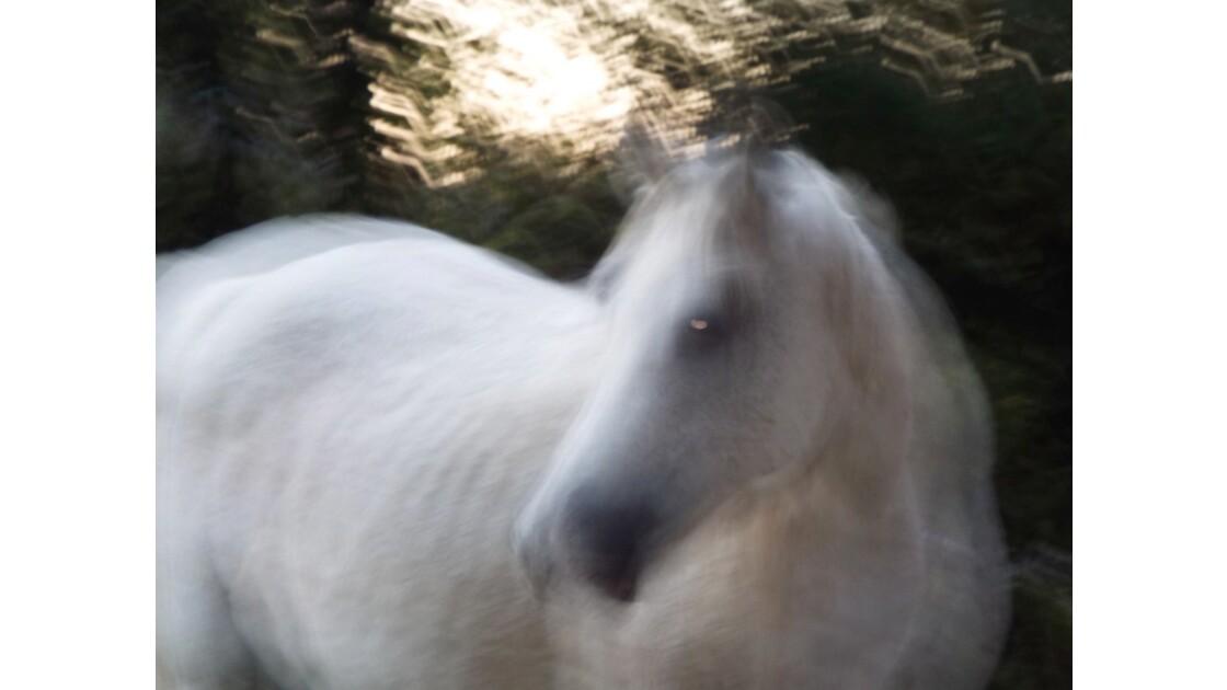 """Un cheval nommé """"Fantôme"""""""