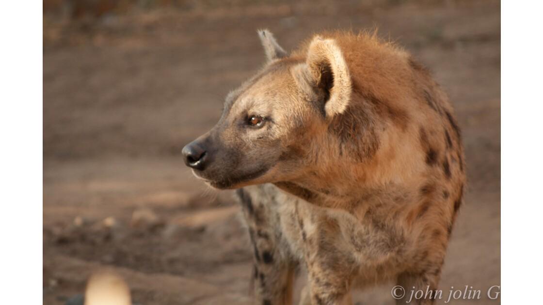 faune du Sénégal