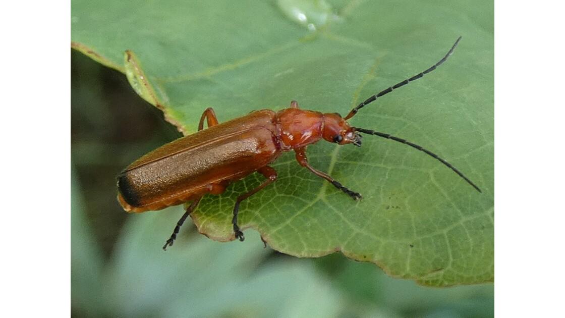 Insecte dans le jardin