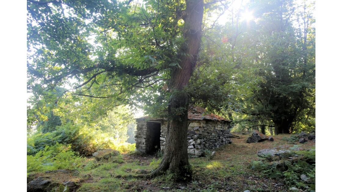 la foret enchantée Corsica