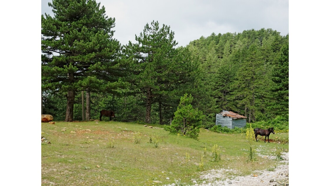 Albanie Parc national Qafë-Shtamë 5