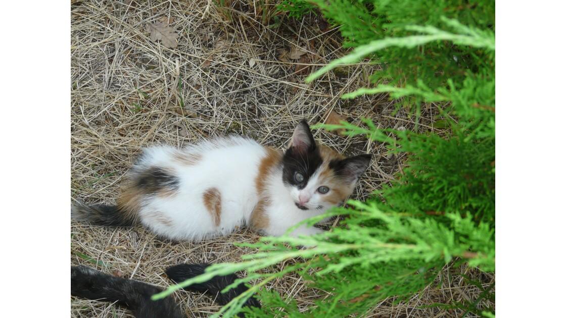 Bébé chat se repose