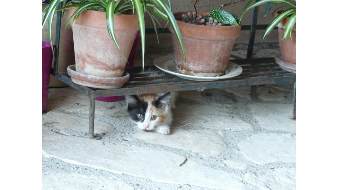 Bébé chat se cache