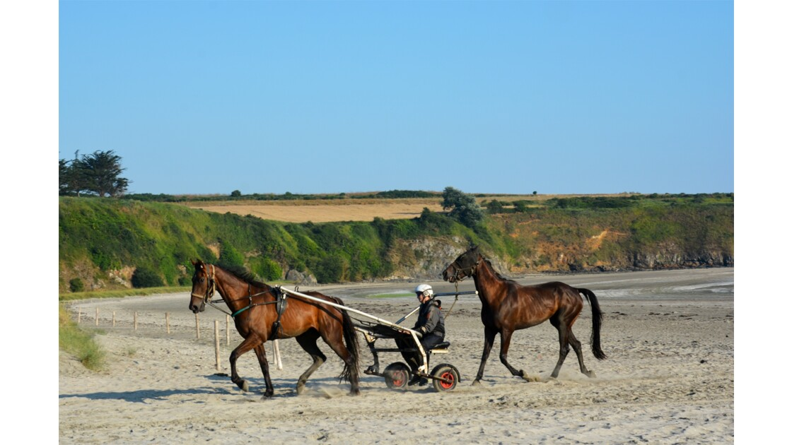 chevaux sur la plage Bretagne