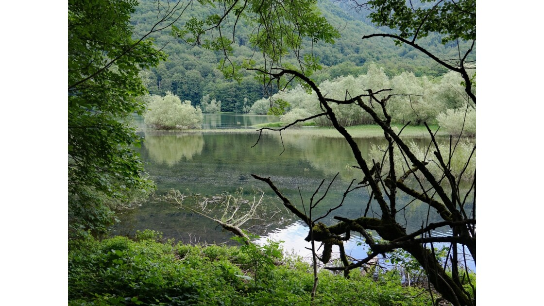 Monténégro lac de Biogradsko 1