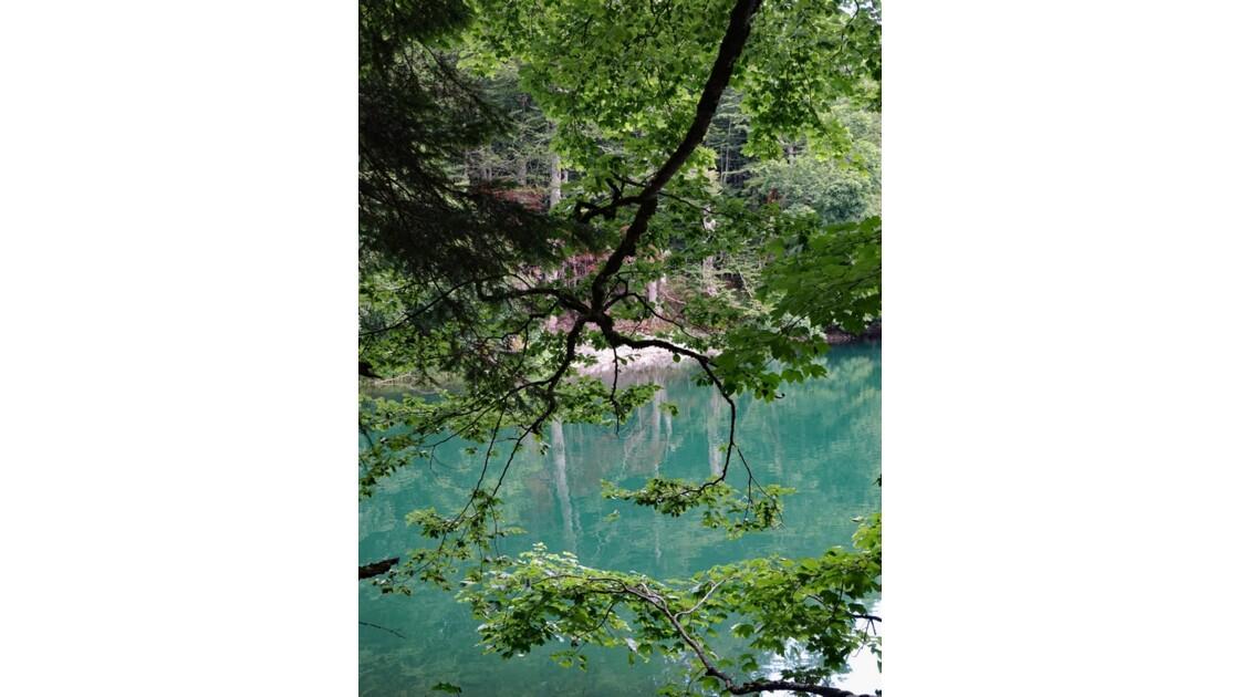 Monténégro lac de Biogradsko 2