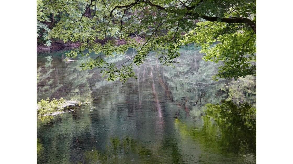 Monténégro lac de Biogradsko 6