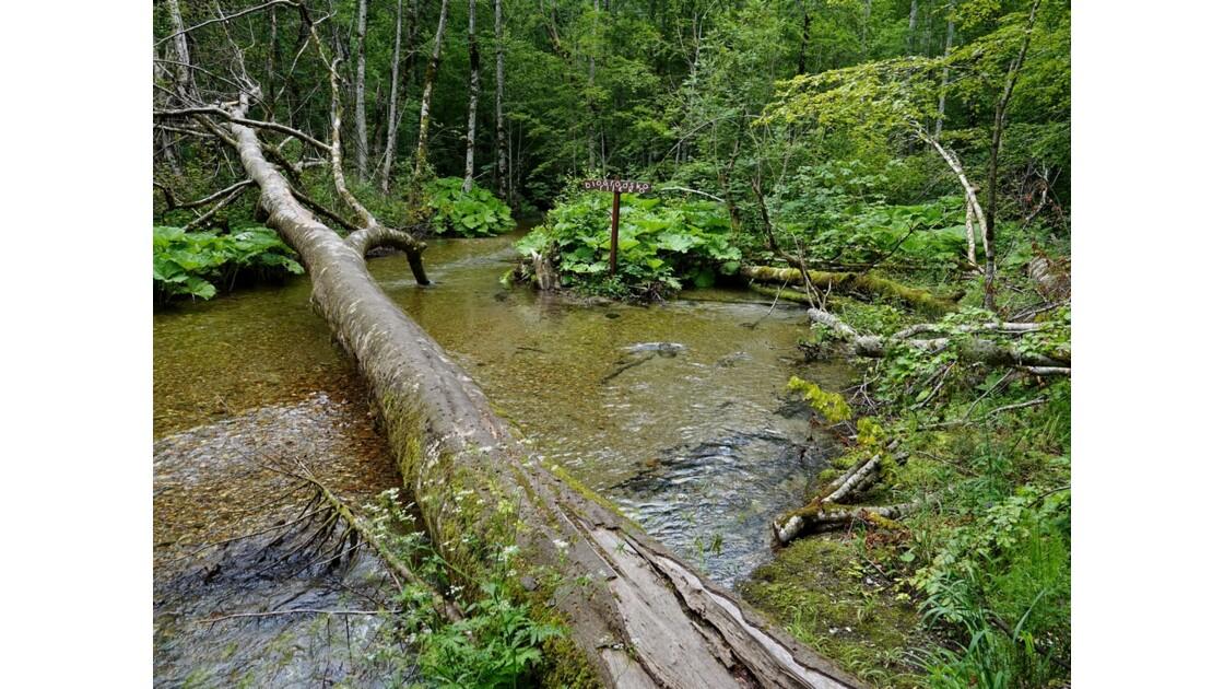 Monténégro lac de Biogradsko 14