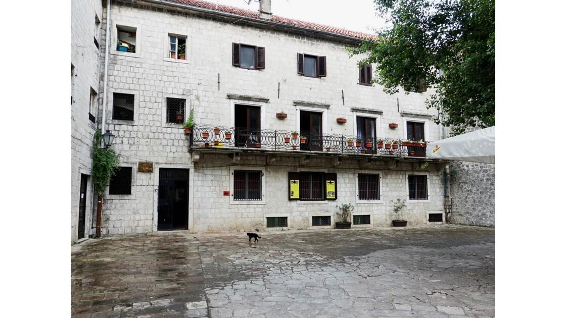 Monténégro Kotor Musée des chats 2