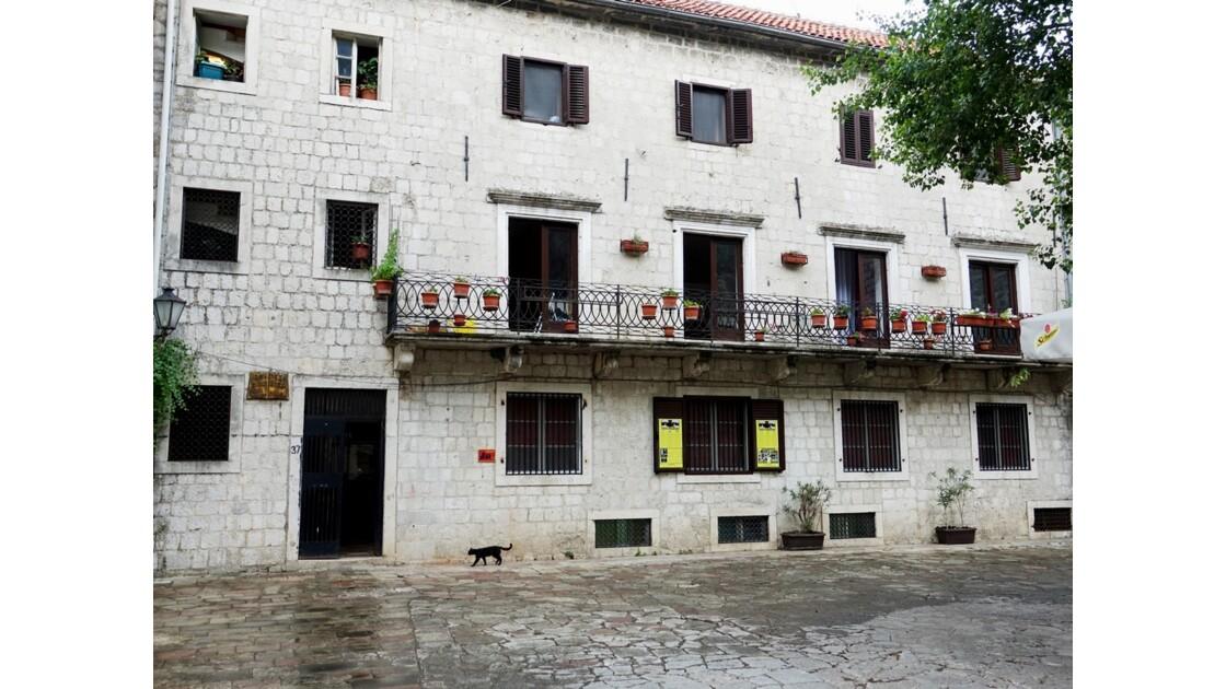Monténégro Kotor Musée des chats 3