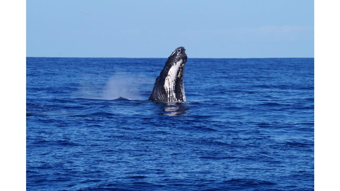 Baleine, réunion