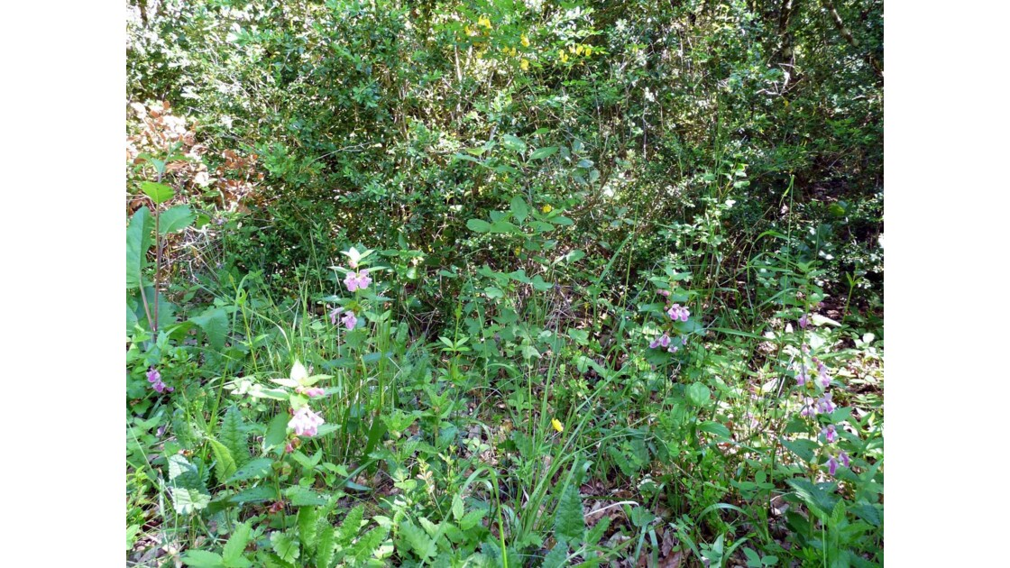 Fleurs du Luberon