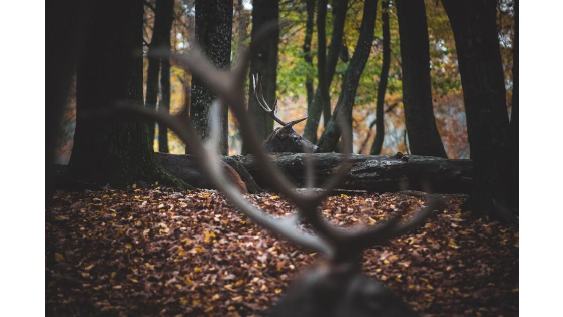 Par delà les bois du cerf