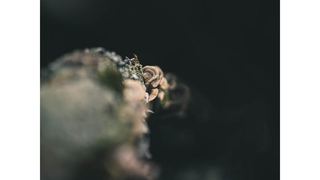 Branche de Champignons