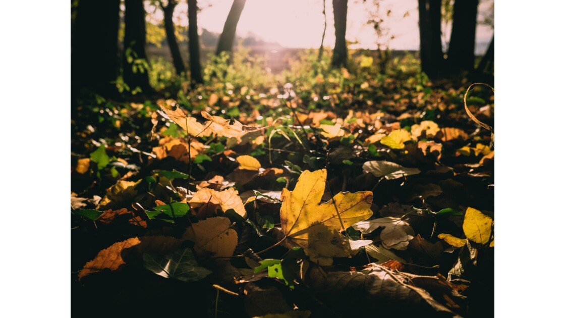 Un automne en Bourgogne