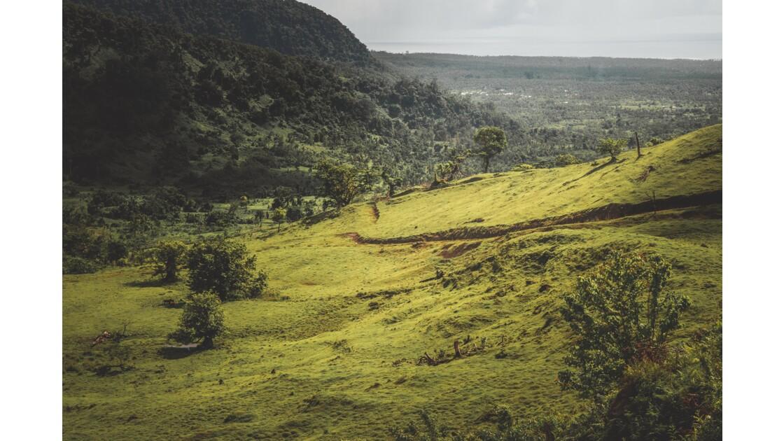 Samoa jungle